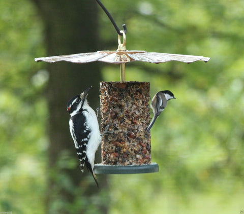 woodpecker and chickadee at seed log feeder