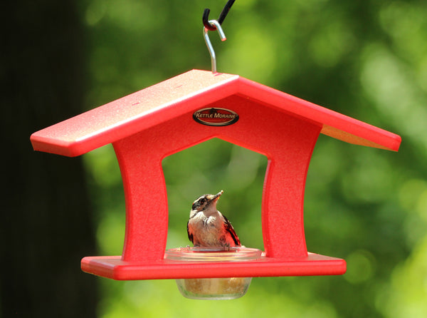 single cup red bird feeder with woodpecker