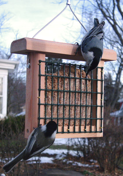 cedar suet feeder with nuthatches eating suet