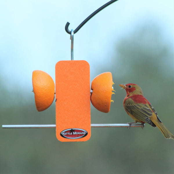 orange plastic oriole feeder stick
