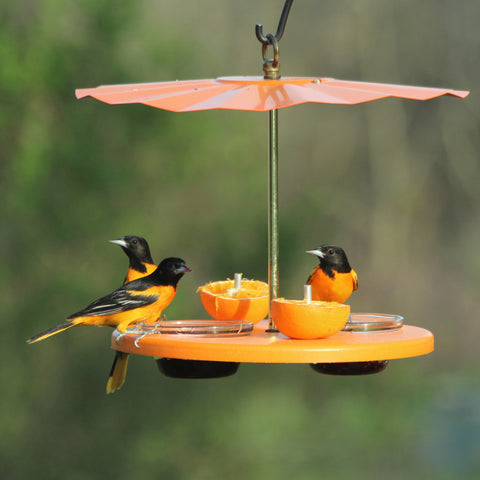 Orioles at platform cup feeder with galvanized roof
