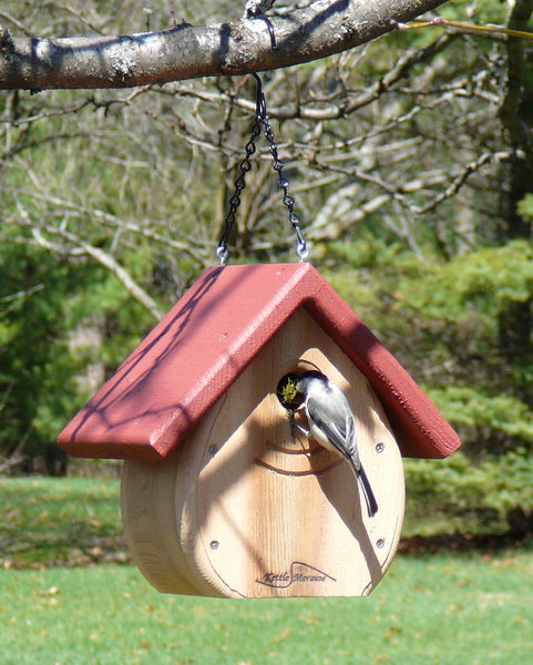 chickadee entering bird house