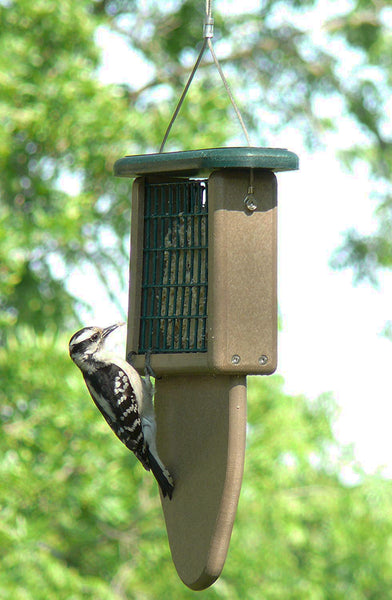 woodpecker examining suet on feeder