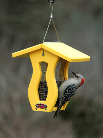 woodpecker on small yellow bird feeder