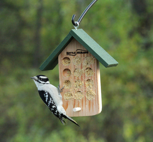 downy woodpecker eating bark butter on cedar bird feeder with roof.