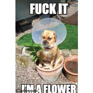 Fuck It I'm A Flower Magnet