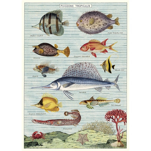 Tropical Fish Poster