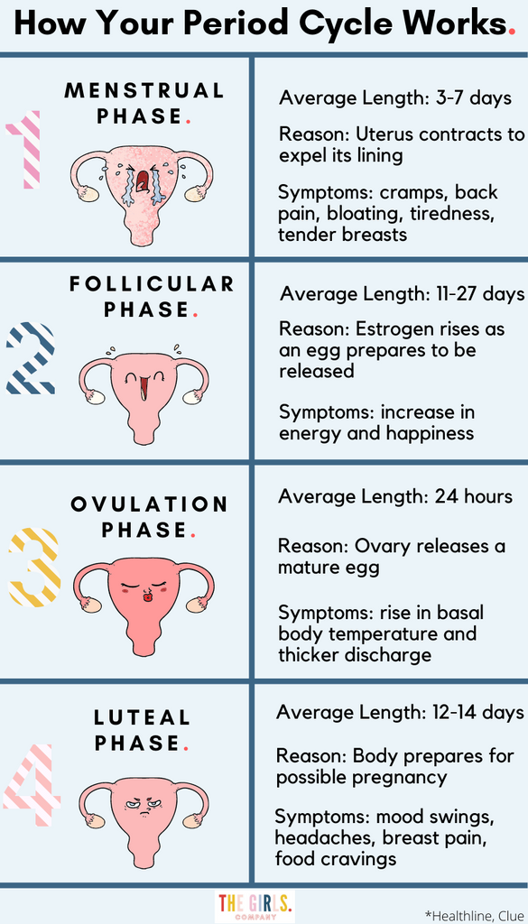 how your period cycle works