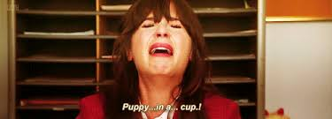 new girl - puppies in a cup