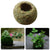 Moss Ball Bonsai Personalized