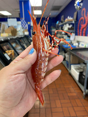 Live BC Spot Prawns (IN-STORE PICK UP ONLY)