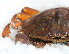 Live BC Dungeness Crab 1.5lb each (IN-STORE PICK UP ONLY)