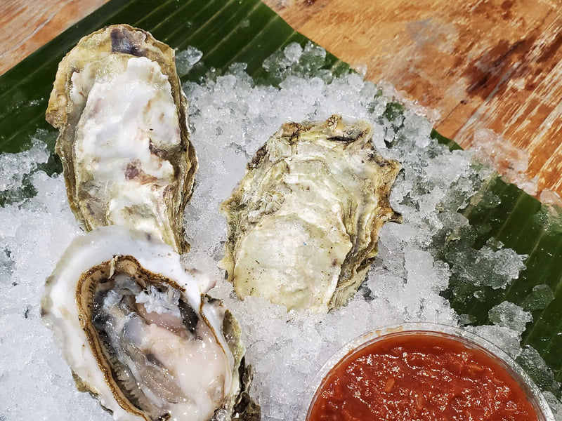 Live Small BC Gem Oysters (1 Dozen)