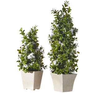 "Raz Imports 16.25"" BOXWOOD MINI TREES WITH SNOW"