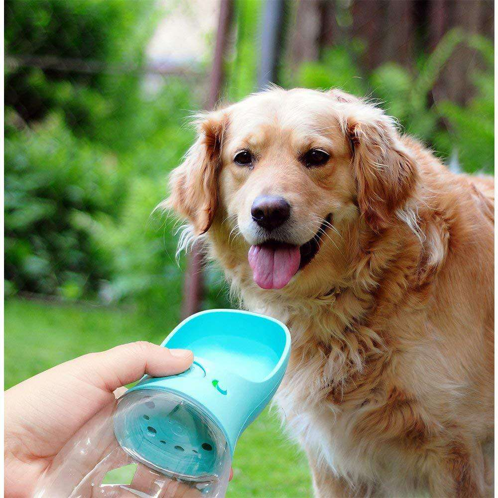 DoggyWater™, notre gourde-gamelle pour chien