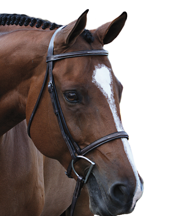 Beval Gladstone Fancy Stitch Browband