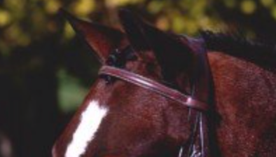 Beval Gladstone Raised Browband