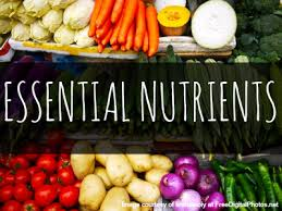 The Nutrient You Can't Live Without