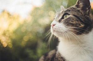 Can cats recognize their own name?