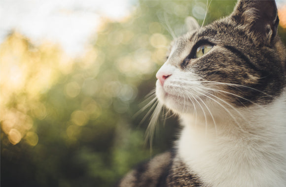 Can cats recognize their own name?-My Purry Friends