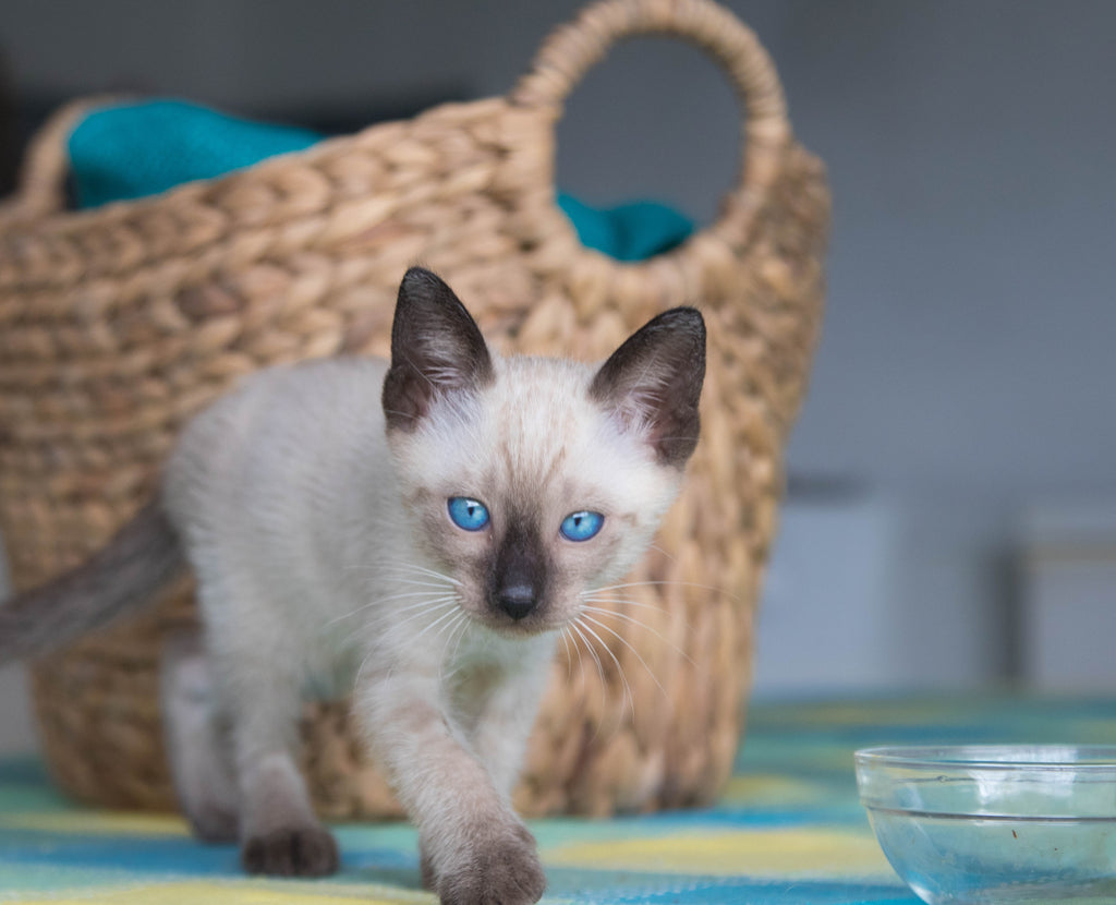 5 Reasons Your Cat Knocks Over Their Water Bowl