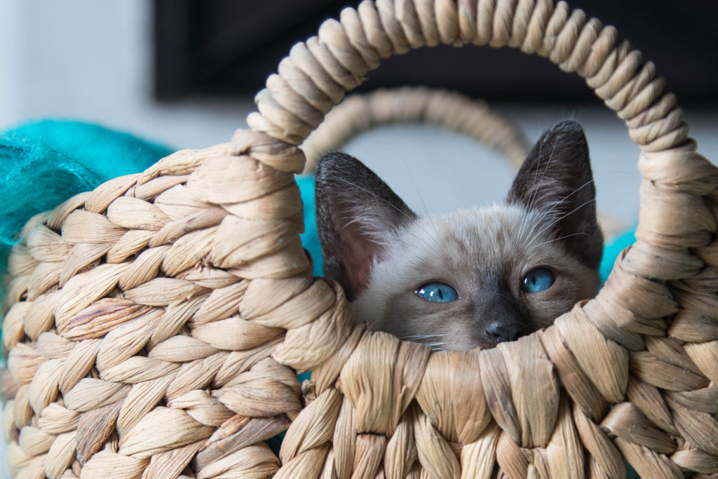 Why your cat needs hiding places