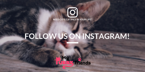 My Purry Friends: Follow us on Instagram for daily cat pics!