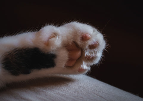 Cat paw - My Purry Friends