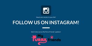 Follow us on Instagram - My Purry Friends