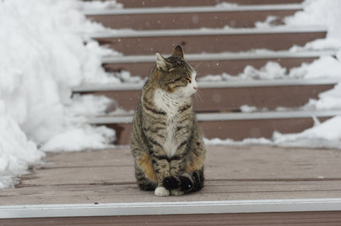 Cat sitting outside in the snow