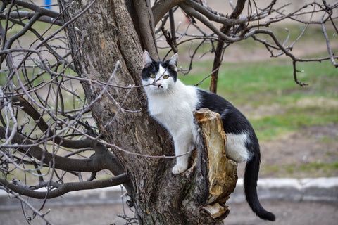Cat in a a tree My Purry Friends