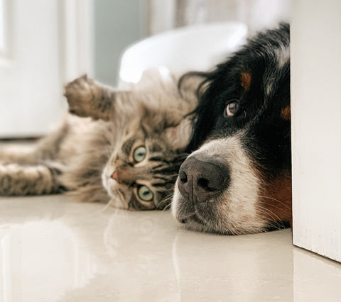 Cat cuddling with dog My Purry Friends