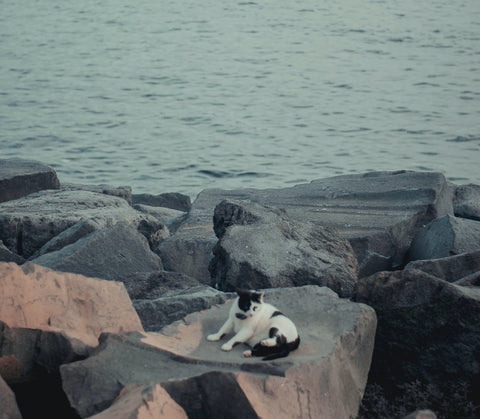 Cat sitting at the sea