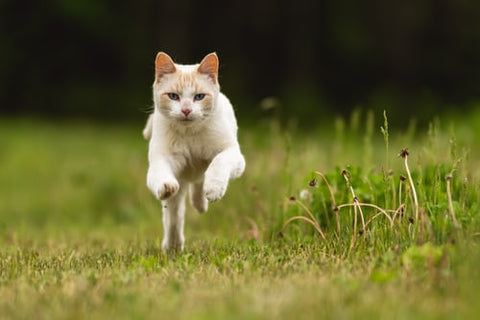 Running cat - My Purry Friends