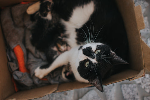 Cat with nest of kittens