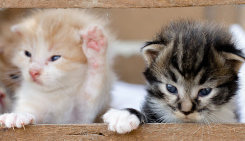 Two cute kittens My Purry Friends