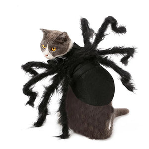 Spider Cat - Costumes - My Purry Friends - Online shop for everything your cat wants.