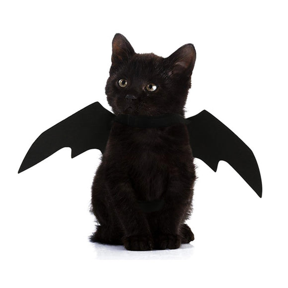 Bat Wings for Cats - Costumes - My Purry Friends - Online shop for everything your cat wants.