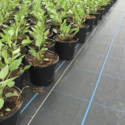 Ground cover geotextile for preventing weed growth