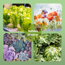 Load image into Gallery viewer, Nutrient Solution A & B for Plants Fruits Vegetable Herbs 200ml with 5 Sheets of 100 Plugs Grow Cubes