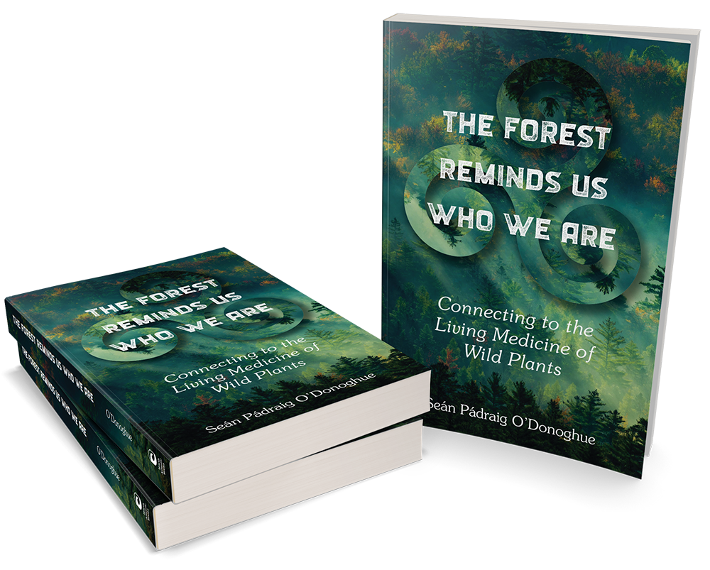The Forest Remind Us Who We Are
