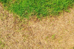 Caring for Your Lawn in a Drought