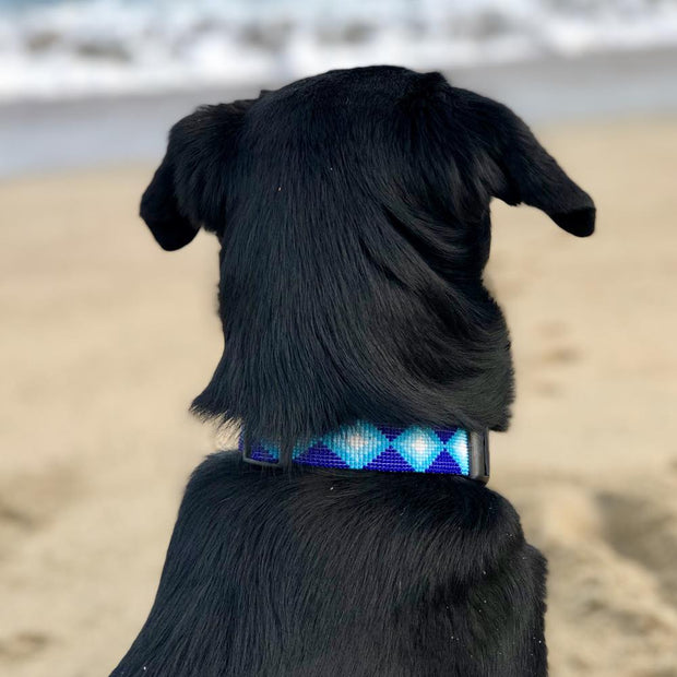 Dog at beach looking at waves wears Aquata seed bead collar.