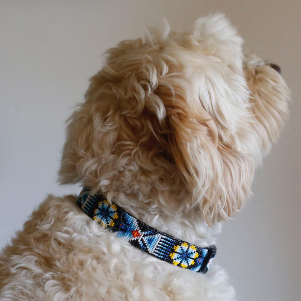 Fiesta Dog Collar