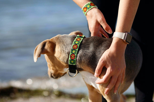 Mango Star Dog Collar