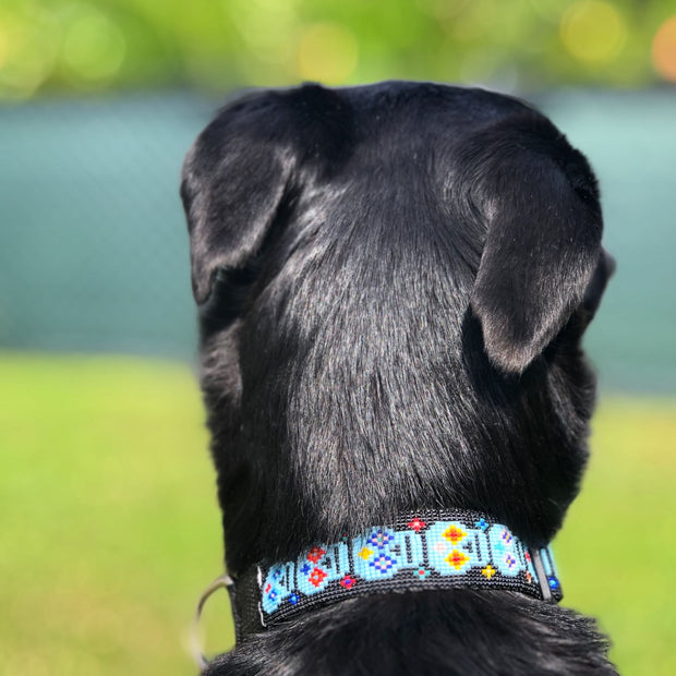 Sugar Skull Dog Collar