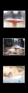 Ikea Billy Oxberg Passepartout Custom made photography Marieke Feenstra hack mushroom fotografie art 3 images