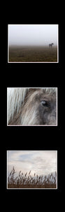 Ikea Billy Oxberg Passepartout Custom made photography Marieke Feenstra hack wadden paarden horses fotografie art 3 images