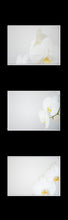 Afbeelding in Gallery-weergave laden, Ikea Billy Oxberg Passepartout Custom made photography Marieke Feenstra hack orchids fotografie art 3 images