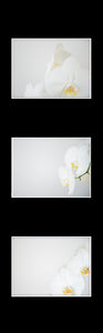 Ikea Billy Oxberg Passepartout Custom made photography Marieke Feenstra hack orchids fotografie art 3 images